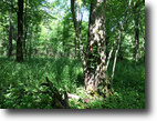 451 Acres Timberland in Cherry Creek NY