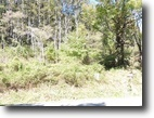 14.77 Wooded Acres near Grayson Highlands