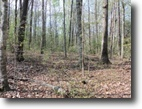 131.30 Acres Wooded & Private in Fentress