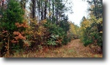 Mississippi Hunting Land 15 Acres Land For Sale-Rockhill Rd, Starkville, MS