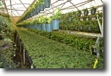 Florida Farm Land 5 Acres Round Lake Road Foliage Nursery