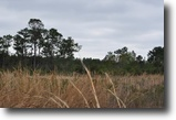 Florida Land 151 Acres Annutteliga Hammock Tract 3