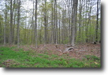 25 acres Hunting Richford NY State Forests
