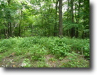 5.52 Acres Wooded in Clay Co.