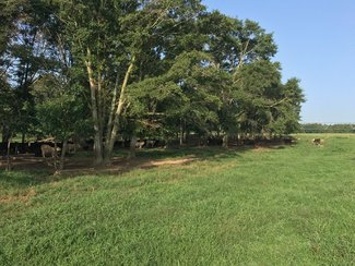 Ample shade perfect for Livestock