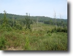 Tennessee Hunting Land 535 Acres Prime Tract For Timberland/Private Retreat