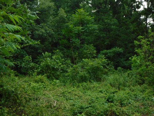 land outbuildings util installed creek property crossville tennessee
