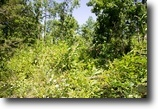 Timber Crossing 5.50 Acres In Missouri