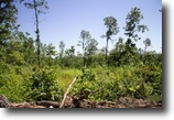 Timber Crossing 5.10 Acres in Missouri