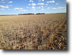 Saskatchewan Farm Land 320 Acres Highly Assessed Bengough SK Farmland