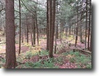 118 acres Timberland in NY Hunting Land