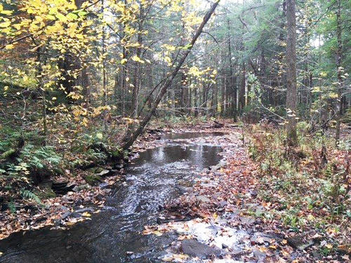 acreage timberland in ny hunting land investment property