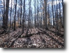 Tennessee Farm Land 18 Acres 17.98ac Wooded, From Level To A Gentle Rol