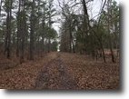 253 Acres for Sale in Webster County, MS