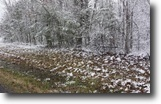 Tennessee Land 1 Acres 1.3 Ac In Cumberland Cove, Tn For $9900