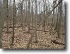 125 acres Timberland in Campbell NY