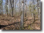 Tennessee Land 7 Acres 6.70ac Totally Wooded, Level to Gentle Rol