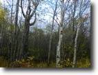 Ontario Hunting Land 40 Acres File 125-  Build yourself a hobby farm