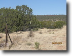 40 acre parcel one of a kind check it out
