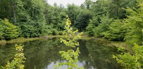 land stocked pond level property crossville tennessee