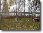 Wisconsin Land 85 Acres Mulligan Lake, Wascott, Wi