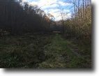300 acre farm with timber