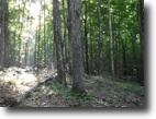 Tennessee Land 7 Acres 6.71ac Totally Wooded,Level To Gentle Roll