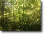 11.58 Wooded Acres In Metcalfe County, KY