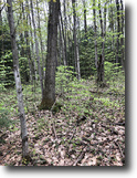 30 acres Hunting Lisle NY 180 Butterfield
