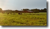 Tennessee Farm Land 70 Acres 70.30 Ac, Creek, 2 Barns, 40 Ac Pasture