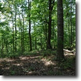 Tennessee Hunting Land 24 Acres 23.77ac Ideal Recreational prop., Secluded
