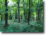 Michigan Farm Land 3 Acres TBD Ridge Rd