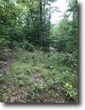 Kentucky Land 50 Acres Just Reduced 50+/-(KY 1208) $60,000