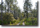 Florida Land 28 Acres Coulter Ridge Hunting Tract
