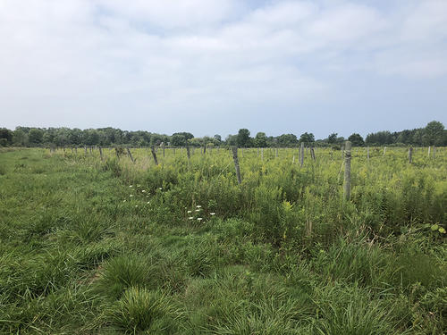 land vineyard in brocton ny north road property