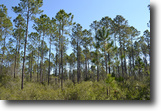 Florida Hunting Land 210 Acres Waccasassa River Tract