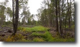144 acres Woodlands with Streams Stockholm