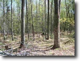 Michigan Land 40 Acres TBD Unnamed Woods (EAST) #1111961