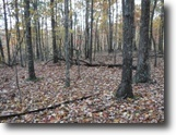 Tennessee Farm Land 13 Acres 12.74ac In  Private Country Location