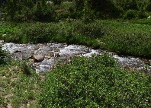 buffalo creek, claim creek colorado