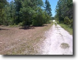 4 Wooded Acres For Sale