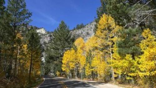 fall colors on the way to the claim california