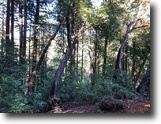 5 Lots Lands 0.3420 acre at Santa Cruz, CA