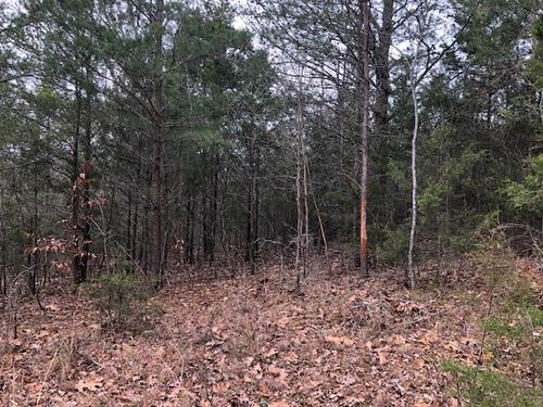 land wooded in green county ky property