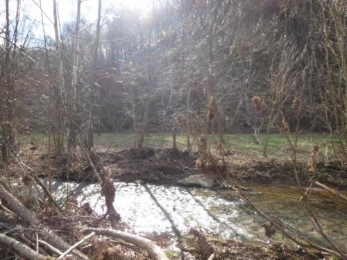 land gushing creek views woods property celina tennessee
