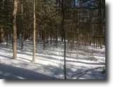 8 acres Buildable Woodlands Forestport NY
