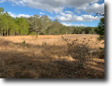 59.91 Acres Timber/Hunting Land
