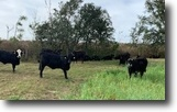 40 Acres Rolling Pastures
