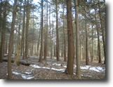 58 acres Hunt Cooperstown NY Williams Road
