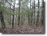Tennessee Land 5 Acres 5+ Ac w/Mtn Views In A Secluded Area